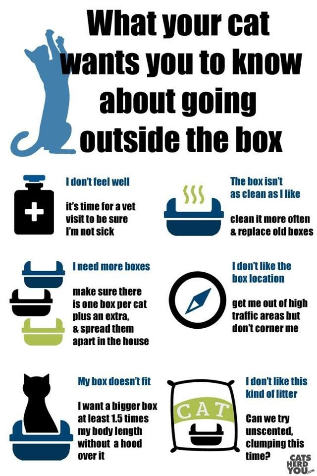 Litter box infograph