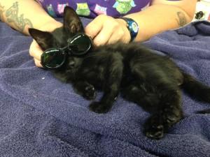 ernie laser goggles