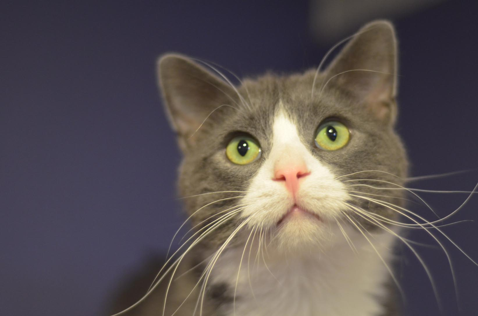 Valley Cats Cat and Kitten Rescue » Resources