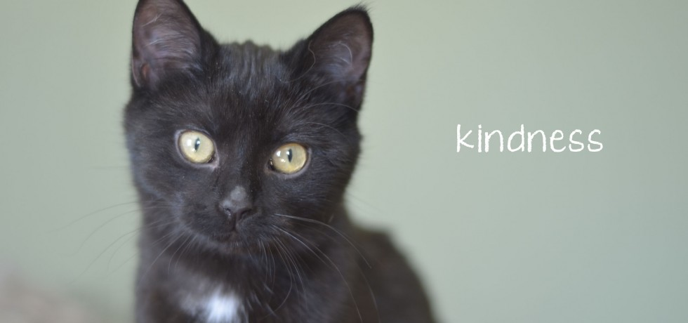 Valley Cats Cat and Kitten Rescue